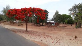 Malawi_Nov_15.JPG