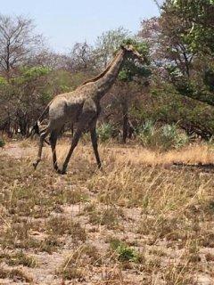 Malawi_Nov_23.JPG